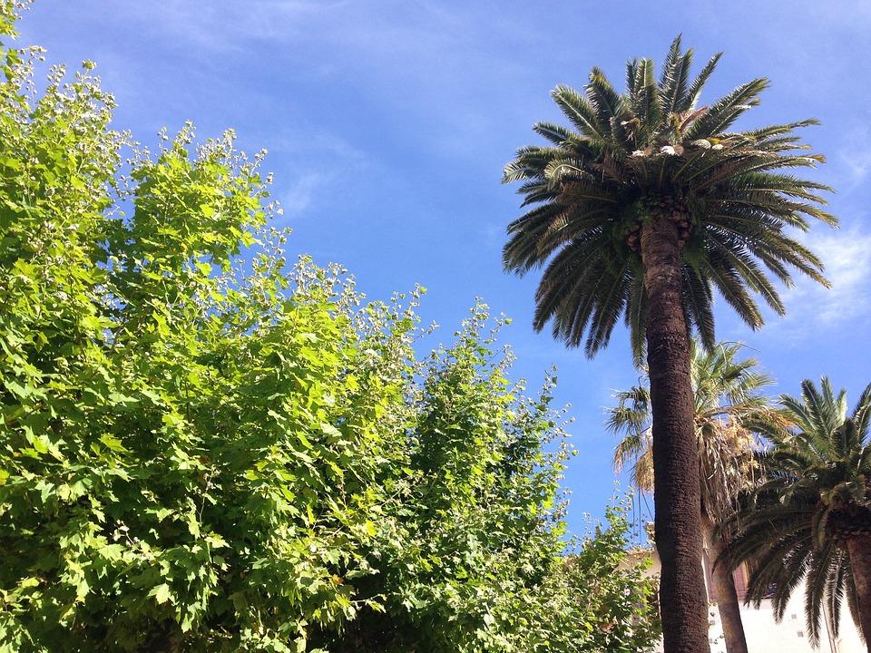 Palm tree, Southern France